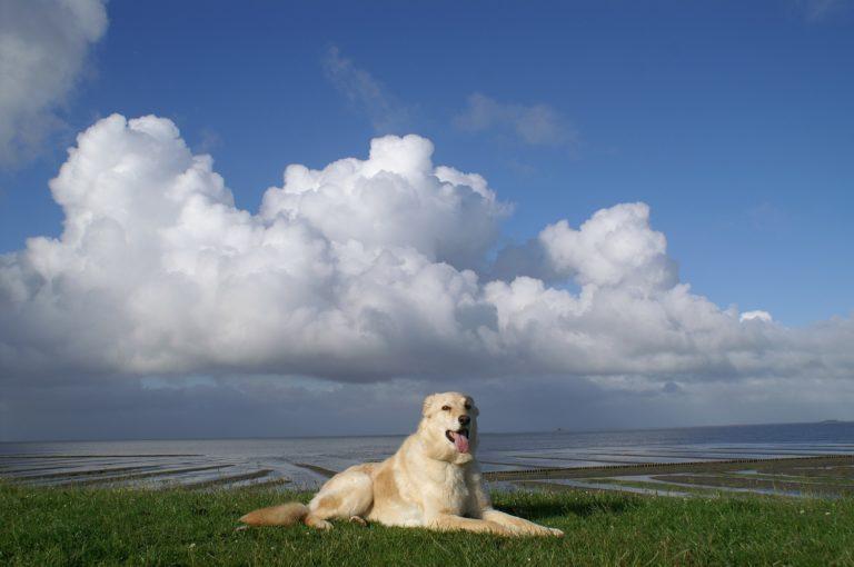 Viel Freizeit für den Hund