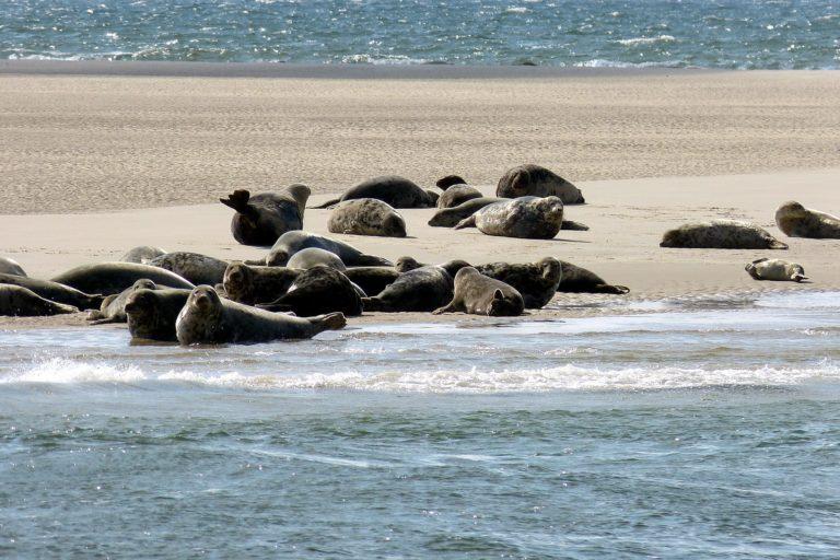 Robben geniessen Freizeit