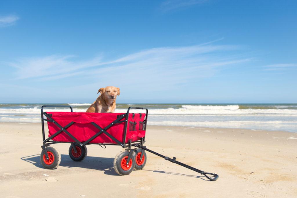 Hund im Bollerwagen